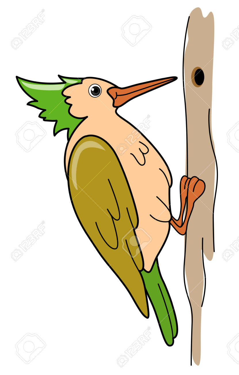Woodpecker Illustration Royalty Free Cliparts, Vectors, And Stock.