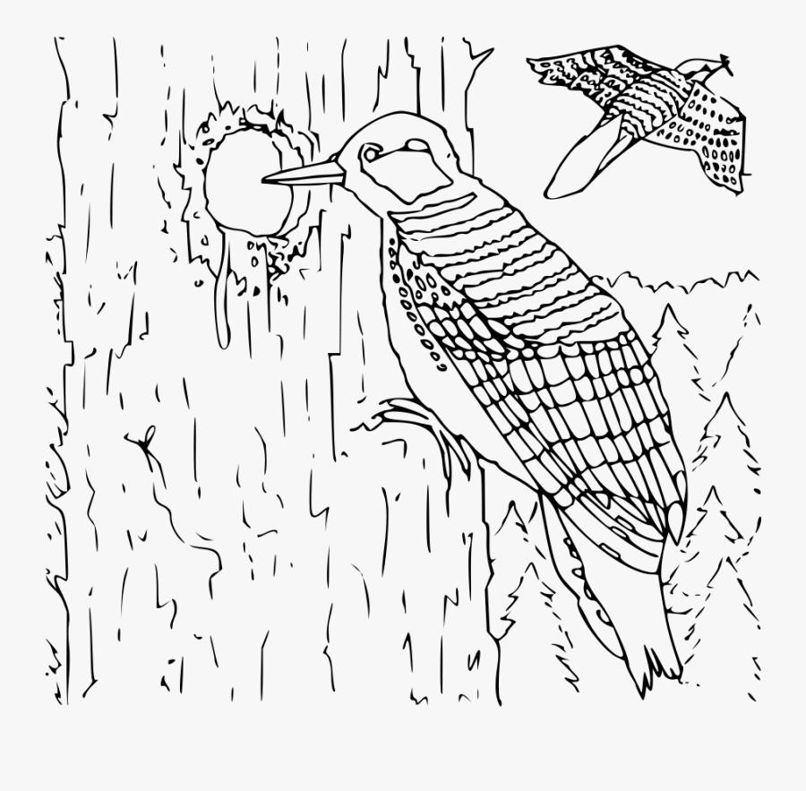 Black Woodpecker Png Clip Arts.