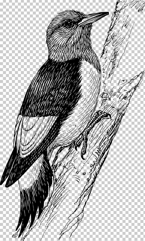 Penguin Bird Downy Woodpecker Red.