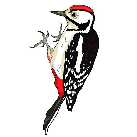 1,477 Woodpecker Cliparts, Stock Vector And Royalty Free Woodpecker.