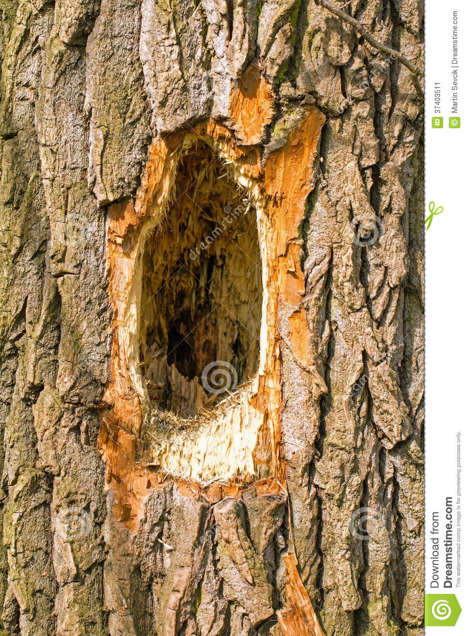 Woodpecker Holes Clip Art.