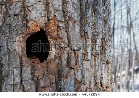 Woodpecker Hole Stock Images, Royalty.