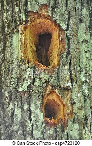 Stock Photography of Woodpecker holes.