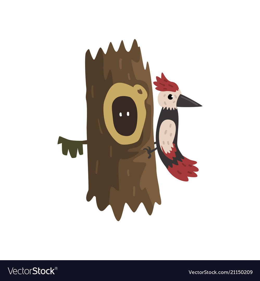 Woodpecker on a hollow tree hollowed out old tree.