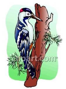 A Woodpecker on a Tree.