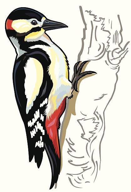 Woodpecker Bird Clipart.