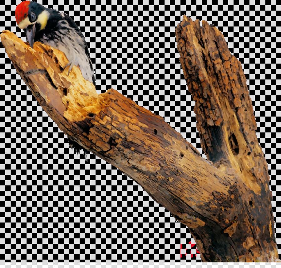 woodpecker wood tree bird trunk clipart.