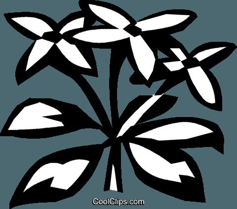 sweet woodruff Royalty Free Vector Clip Art illustration.