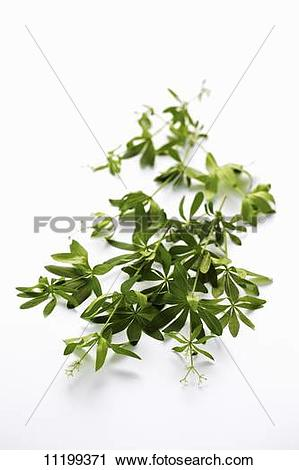 Stock Photography of Woodruff sprigs on a white surface 11199371.
