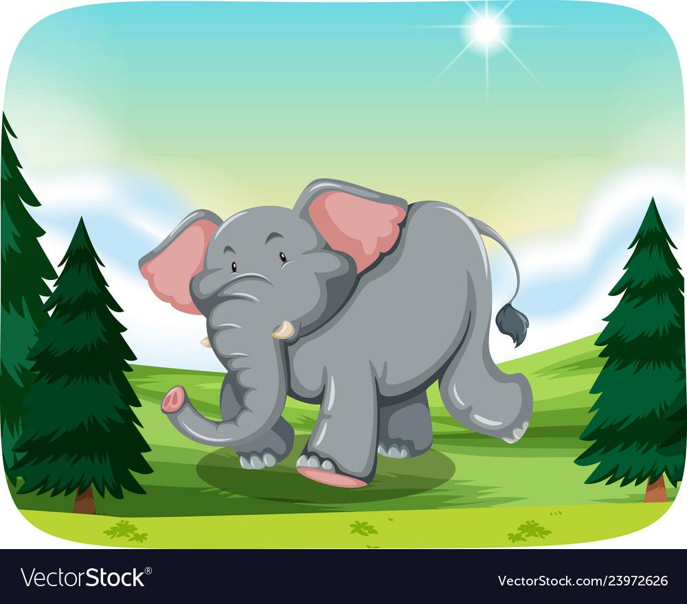 Elephant in woods scene.