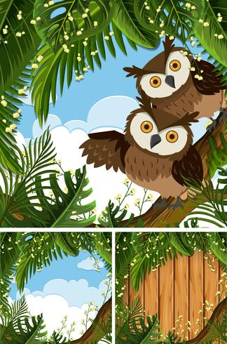 Three scenes with owls in the woods.