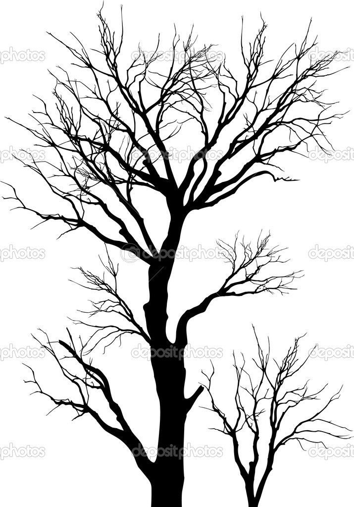 Vector, tree, silhouette, nature, forest, branches, woods.