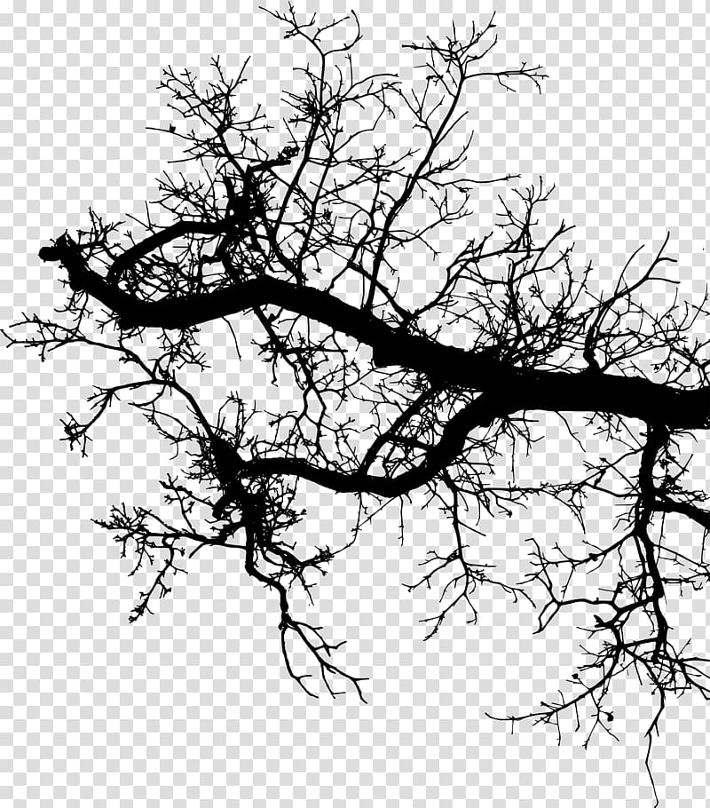 Twig Branch Silhouette Drawing, branches silouhette.