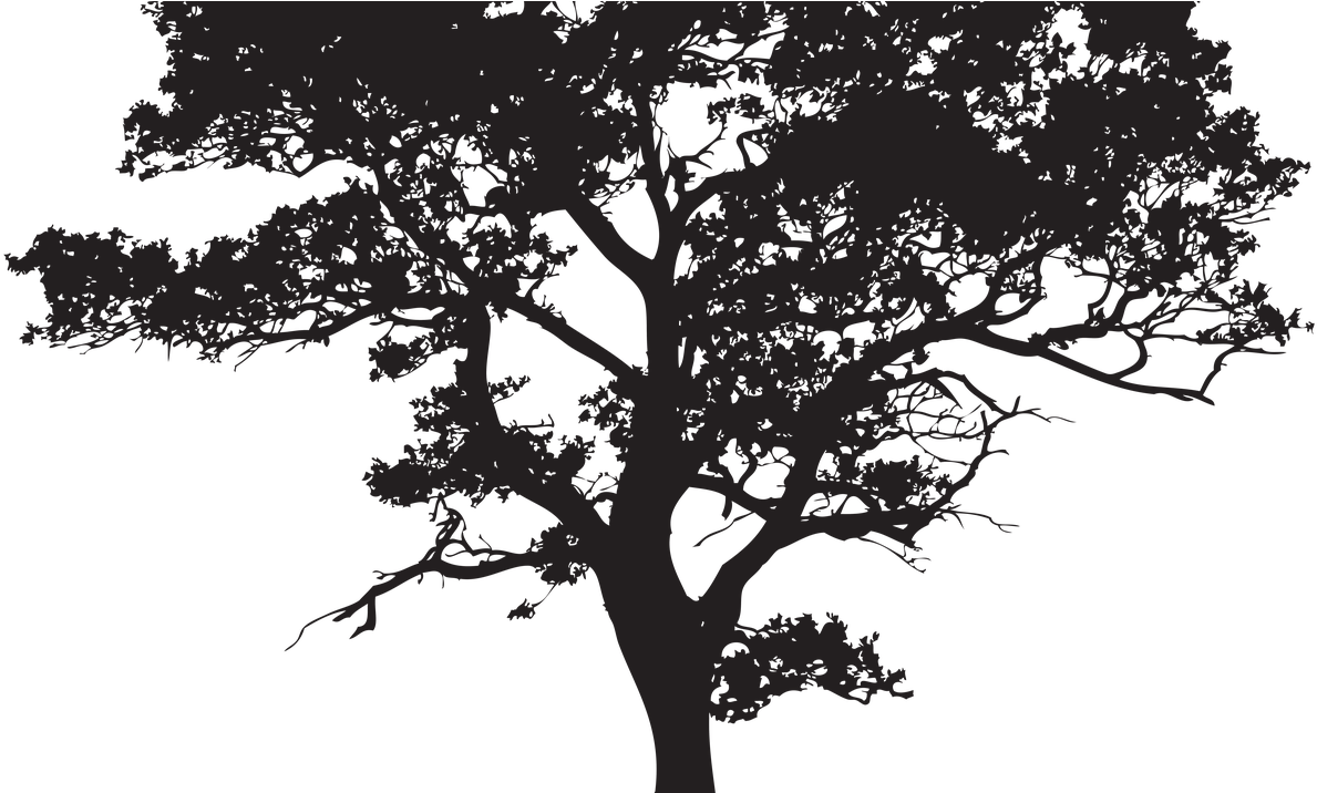 Transparent Background Tree Silhouette , Transparent Cartoon.