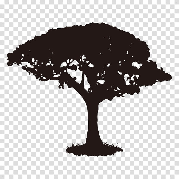 Tree Branch Silhouette, Youtube, Walnut Tree, Wood, Africa.