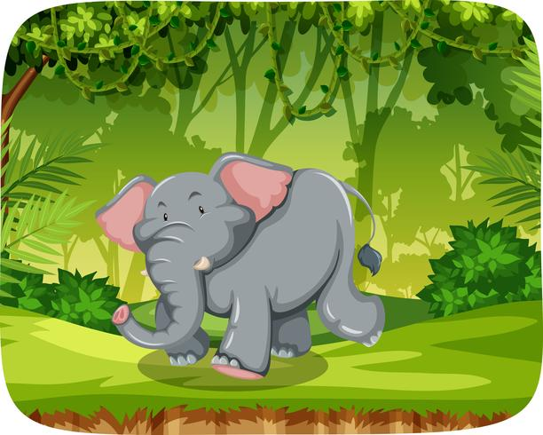 Elephant in woods scene.