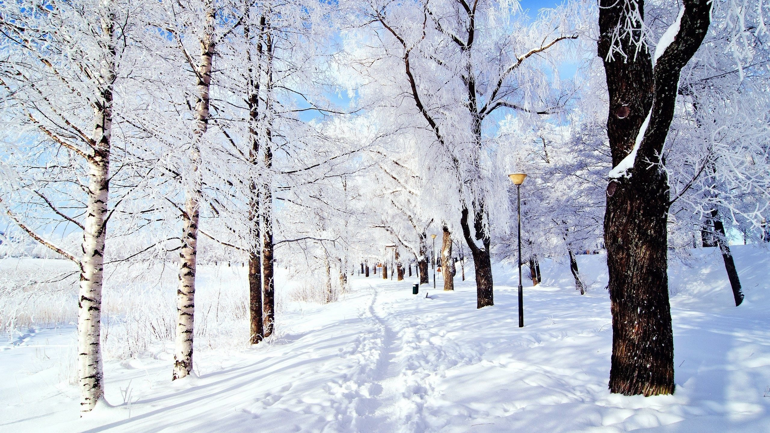 Free Snowy Woods Cliparts, Download Free Clip Art, Free Clip.