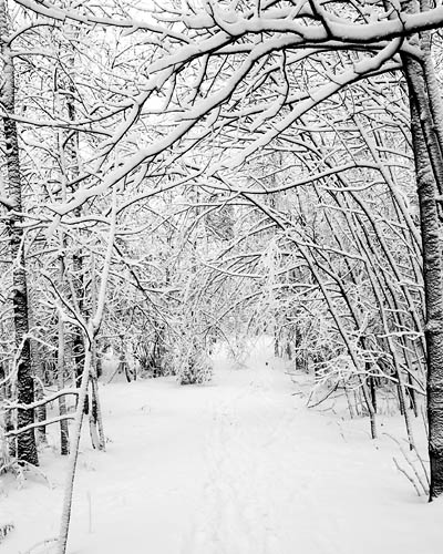 Snowy woods clipart.