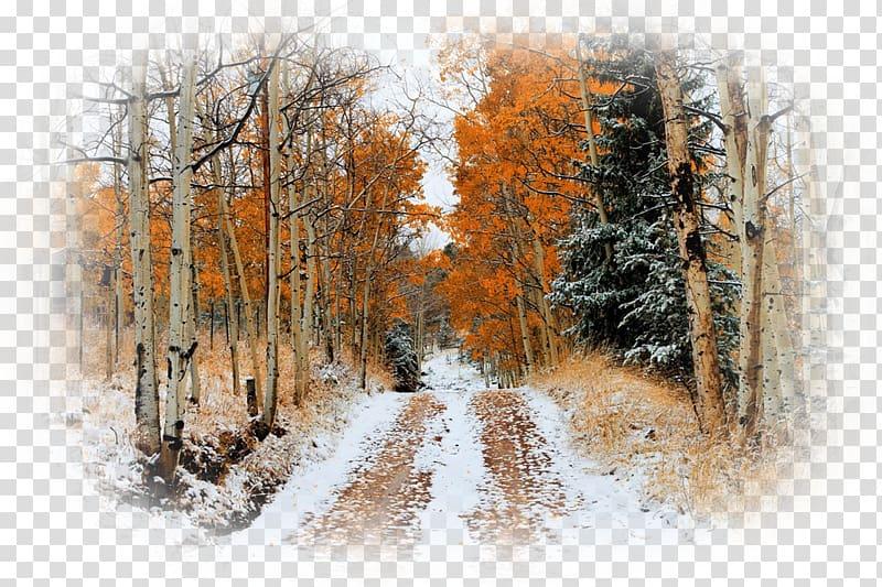 Snow Autumn leaf color Tree Desktop , snow transparent.