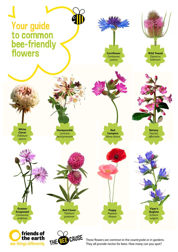 17 Best ideas about Bee Spray on Pinterest.