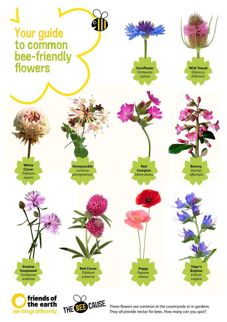 17 Best ideas about Bee Spray on Pinterest.