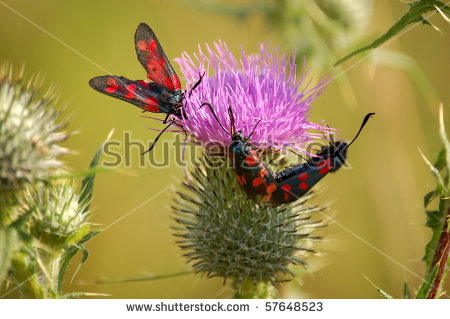 Citrina's Portfolio on Shutterstock.