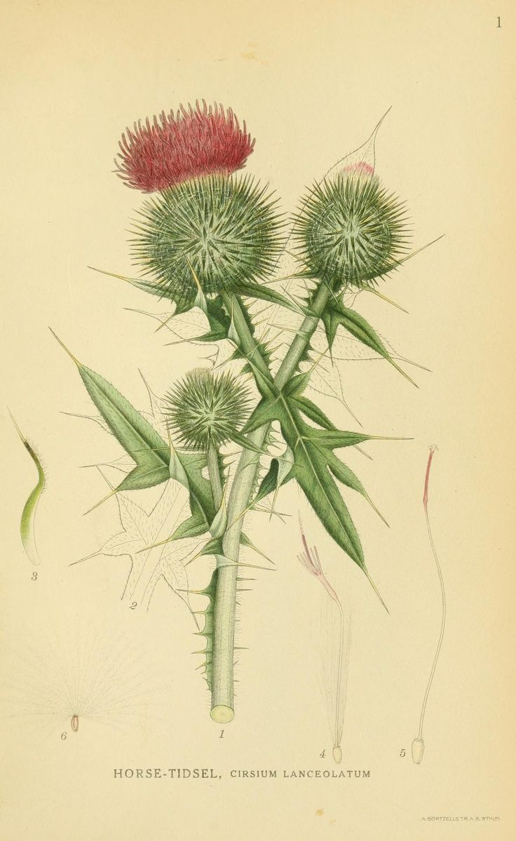1000+ images about Spiny on Pinterest.