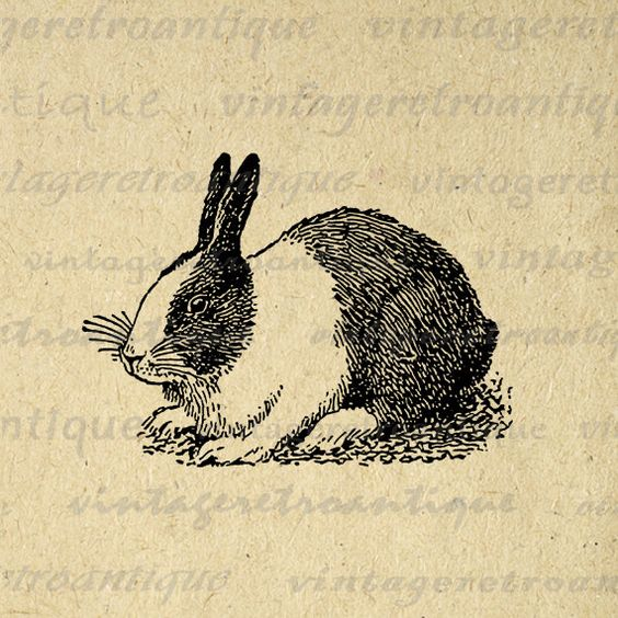 Dutch Rabbit Printable Digital Download Bunny Graphic Illustration.