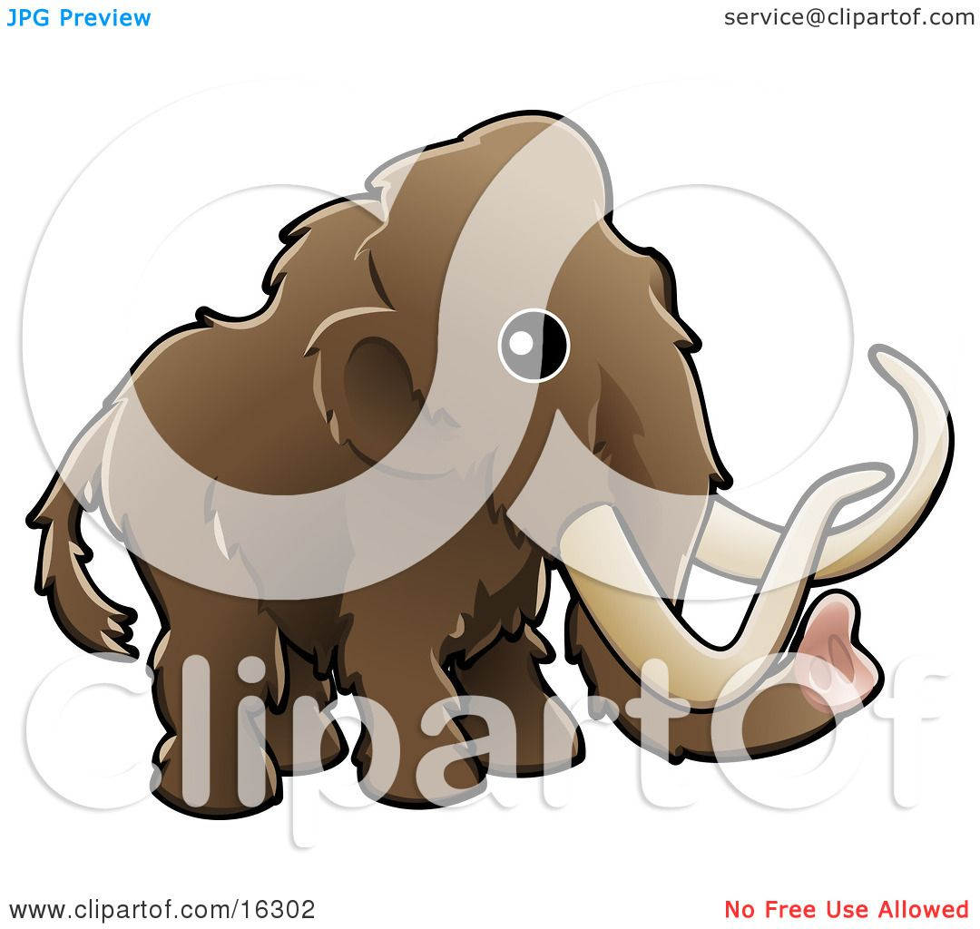 Baby Brown Woolly Mammoth, Also Known As The Tundra Mammoth.