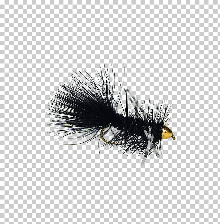 Artificial fly Holly Flies Insect Coast, Woolly Bugger PNG.