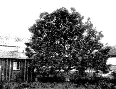 The Project Gutenberg eBook of Walnut Growing in Oregon.
