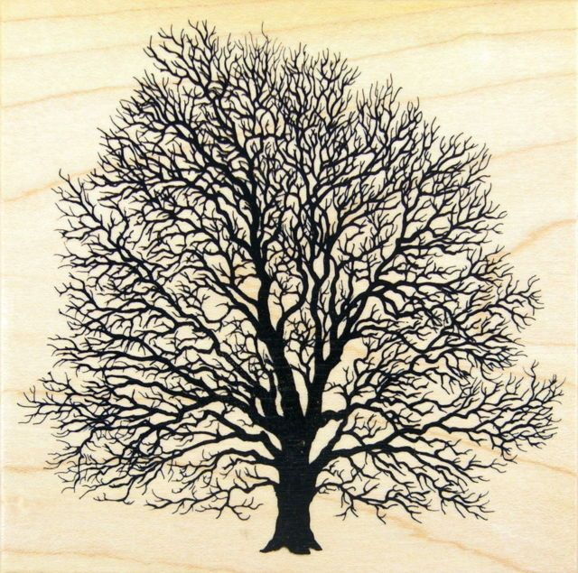 PSX K 1457 Black Walnut Tree Rubber Stamp Nature Landscape.