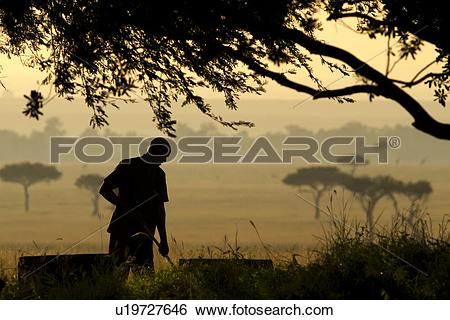 Stock Images of Dawn work in the Maasai Mara: man silhouetted as.