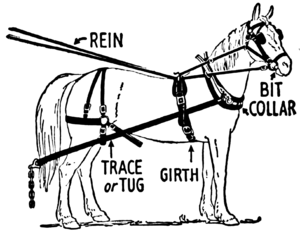 Horse harness.