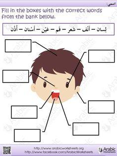 Worksheet For Kindergarten My Body Islamic Clipart.