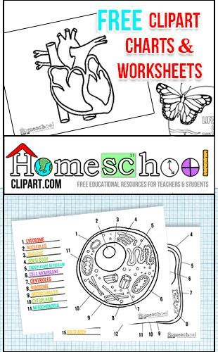 Free Clipart, Charts & Worksheets at http://HomeschoolClipart.com.