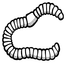 Image result for black and white clip art of earth worm.
