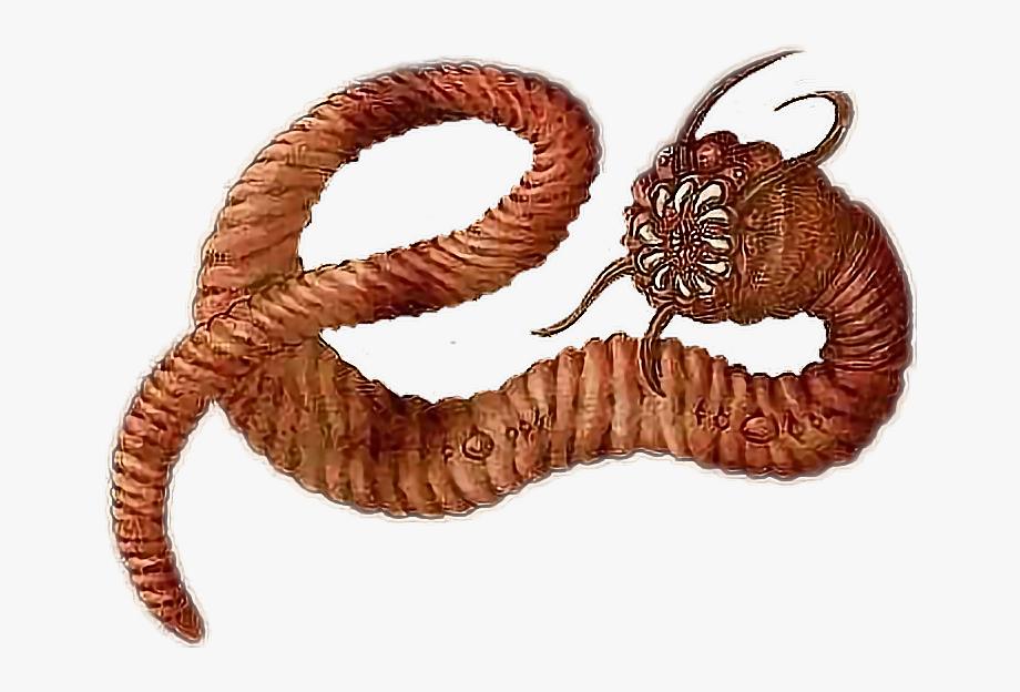 Worm Clipart Centipede.