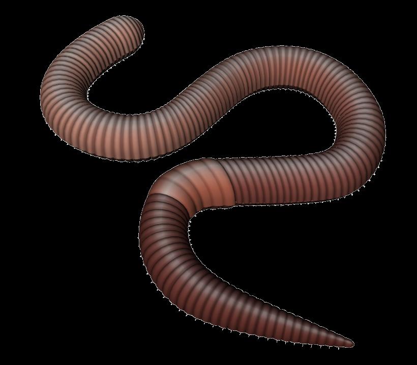 Earthworm Clip art.
