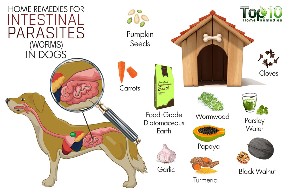 Worm Herbal Clipart Clipground