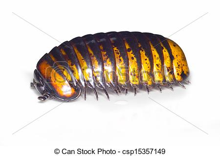 Worms And Millipedes Clipart.