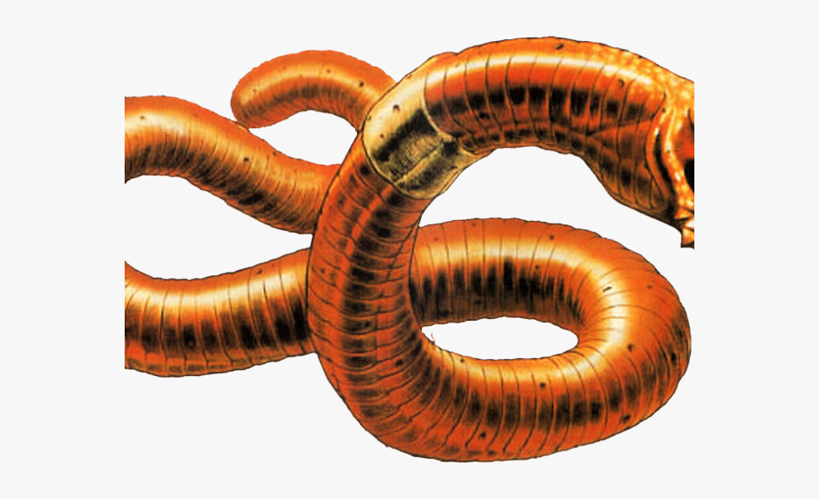 Worms Clipart Parasitic Worm.