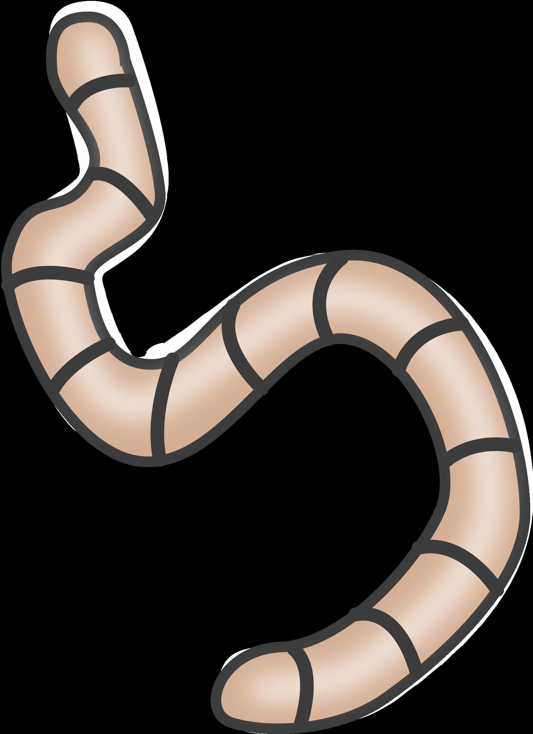 Worm clipart detritivore, Worm detritivore Transparent FREE.
