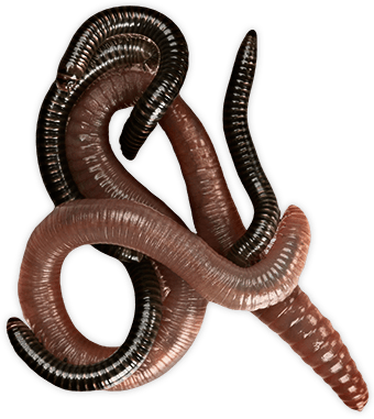 Worms Group transparent PNG.