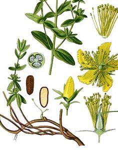native american medicines.