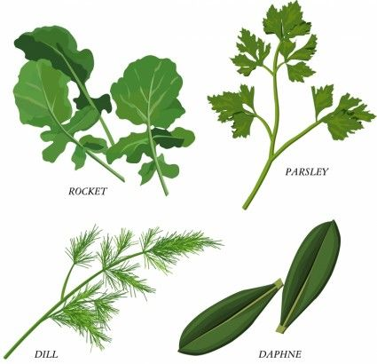 1000+ images about Herb Drawings on Pinterest.