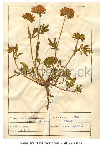 Herbal Garden Stock Photos, Royalty.