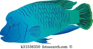 Wrasse Clipart and Illustration. 14 wrasse clip art vector EPS.