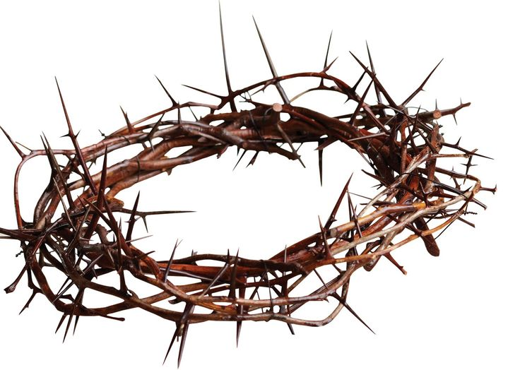 17 Best ideas about Crown Of Thorns on Pinterest.