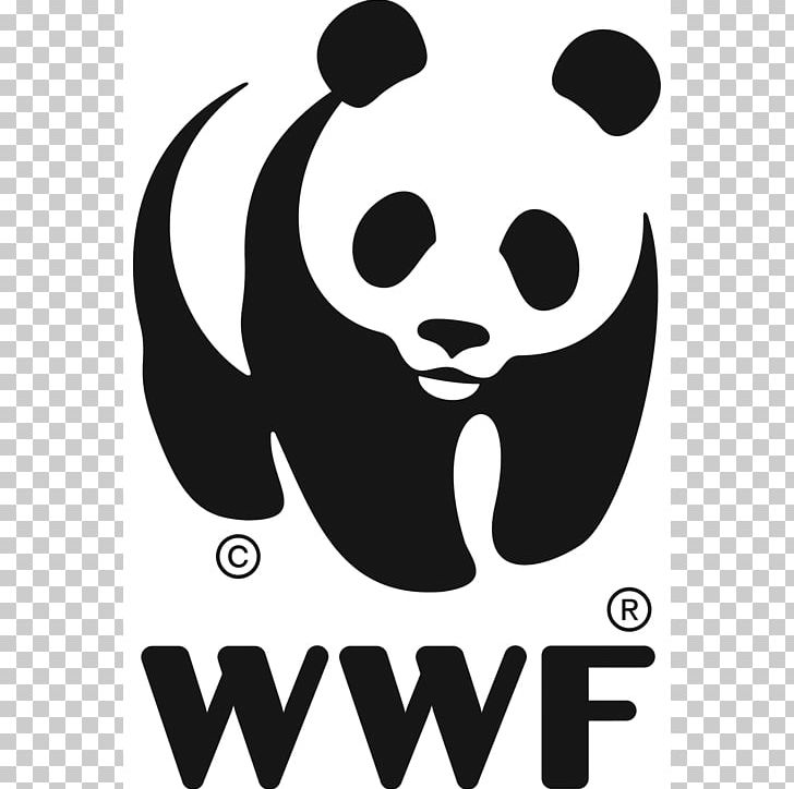 World Wide Fund For Nature WWF Madagascar Logo Conservation WWF.